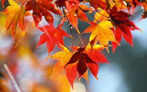 calendario-lavori-autunno
