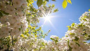 calendario-lavori-primavera